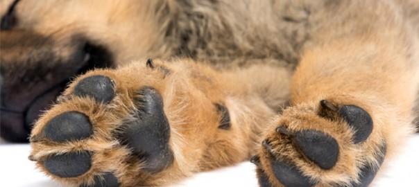 Consejos para curar las almohadillas de los perros