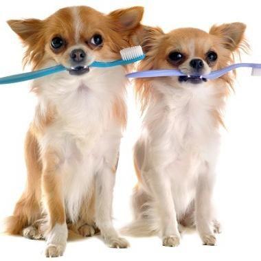 8 Consejos para mantener la higiene dental de tu perro