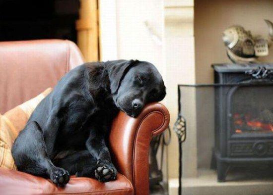 Cómo educar a nuestro perro para que no se suba al sofá