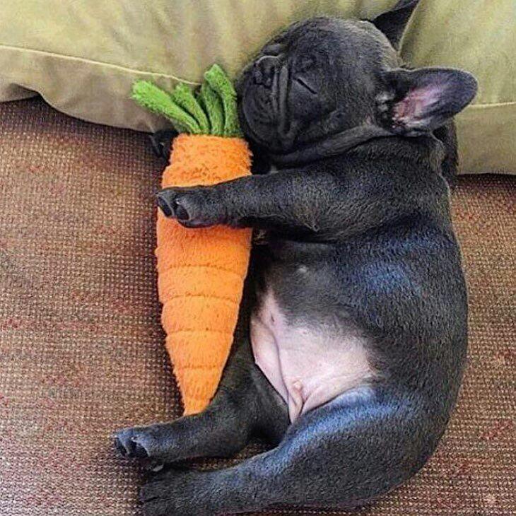 ¿Puede ser mi perro vegetariano? O…¿Puede ser vegano?