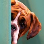 ¿Tu perro es un miedoso?Consejos y precauciones que necesitas