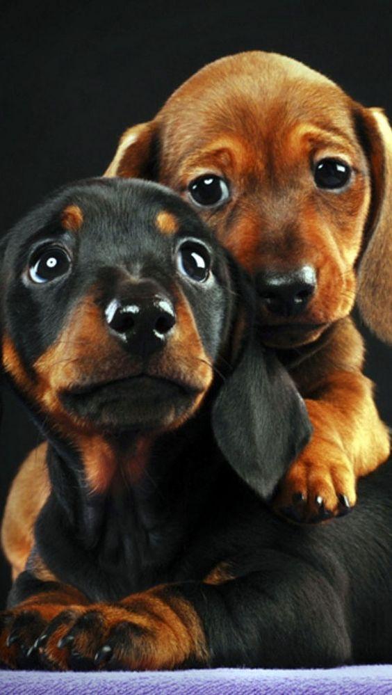 mi cachorro llora mucho, ¿qué puedo hacer?