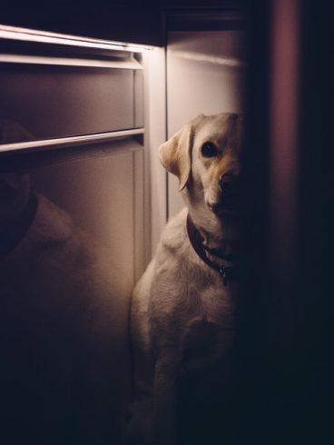 Mi perro es muy miedoso