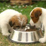 Sistema digestivo de un perro