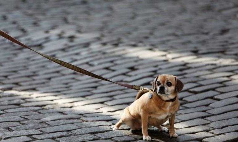 Me encanta pasear al perro