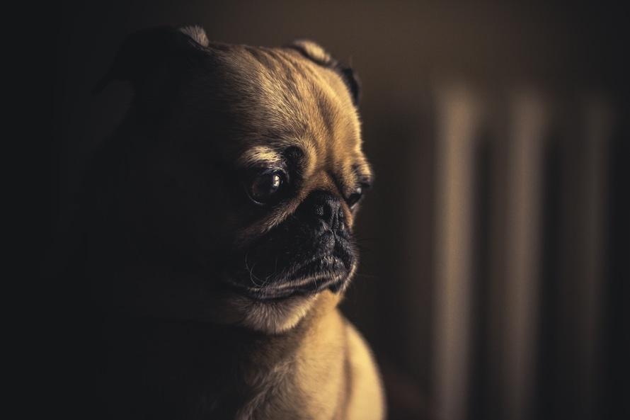 Cómo puedo quitarle el miedo a un perro maltratado