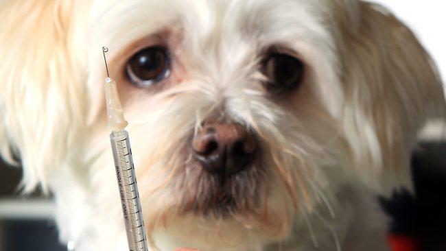 tratar la diabetes canina sin insulina