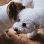 mi perro monta a otros perros