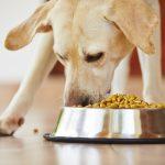 mi perro no mastica la comida