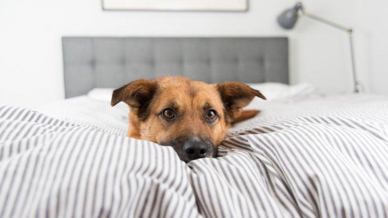 Resultado de imagen para rascar cama perro