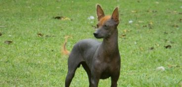 perro pila argentino
