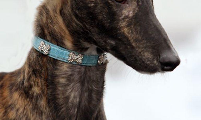 raza de perro galgo español