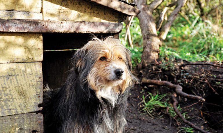 Te presentamos al gran desconocido perro ovejero magallánico