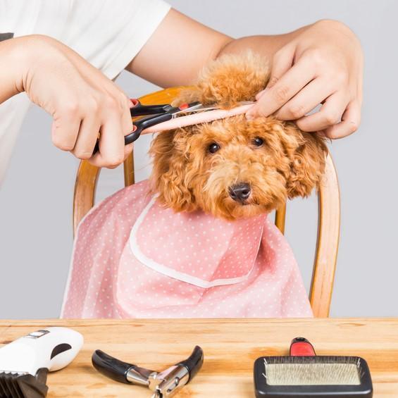 ¿Debemos cortar el pelaje a nuestro perro en verano?