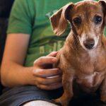 15 cosas que debes saber de tu perro