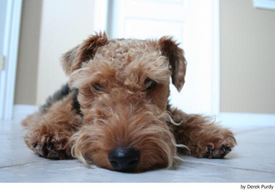 Cómo enseñar a un cachorro donde hacer sus necesidades