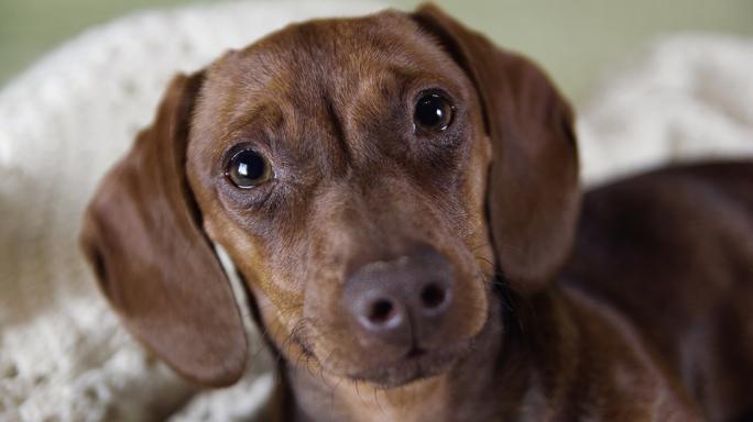 Cómo interpretar la mirada de un perro