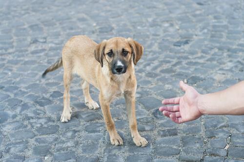 Cómo me puedo acercar a un perro desconocido
