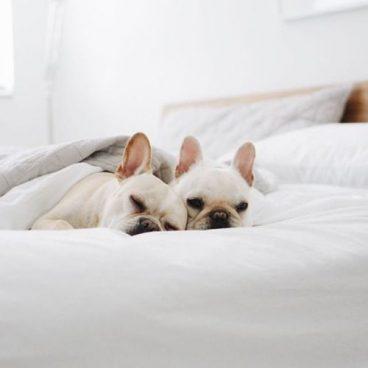 Cardiomiopatía dilatada en perros