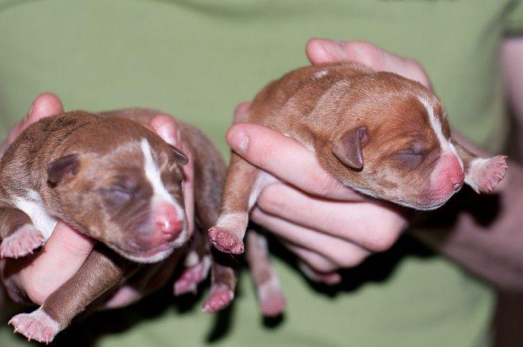 Claves para saber como alimentar a un cachorro recién nacido