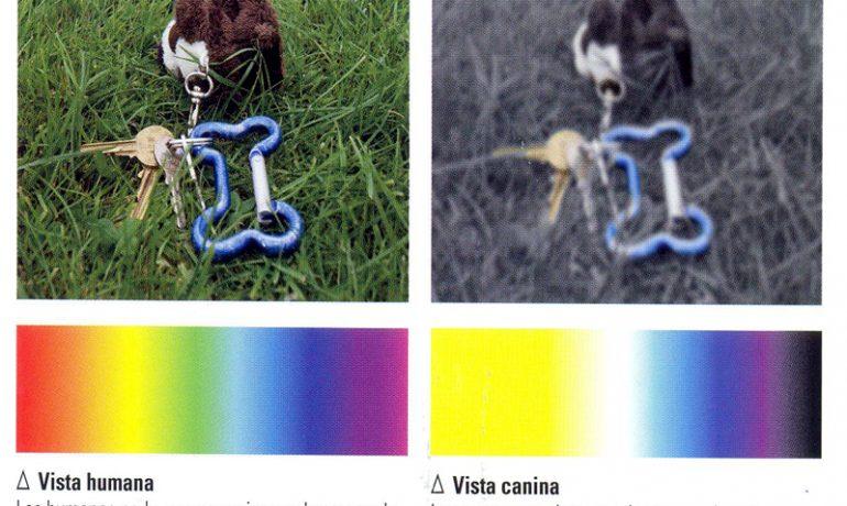 Como es la vision de los perros