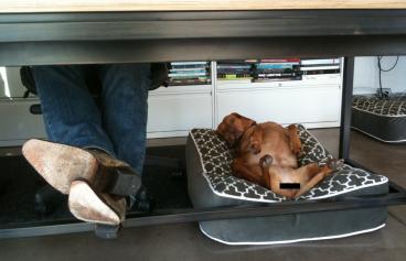 Consejos para llevar a tu mascota a la oficina