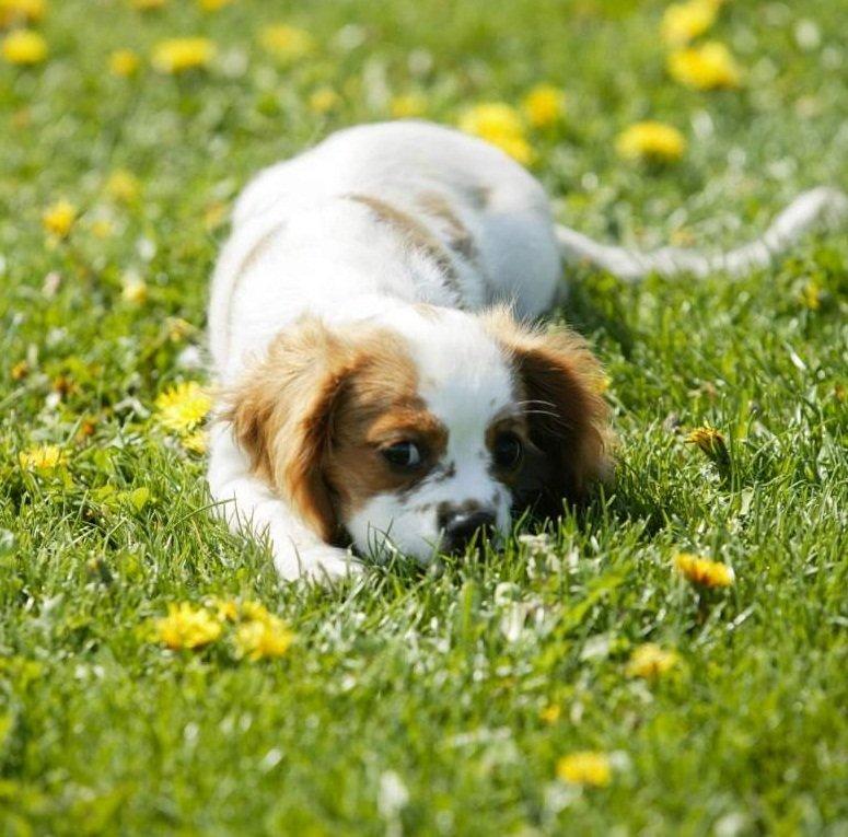 Cosas que debes saber sobre la picadura de avispa en perros