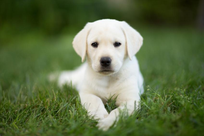 Cuándo empezar a desparasitar a un perro