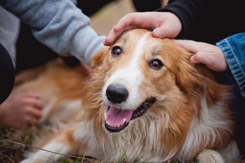 Cuando NO debes acercarte a un perro desconocido