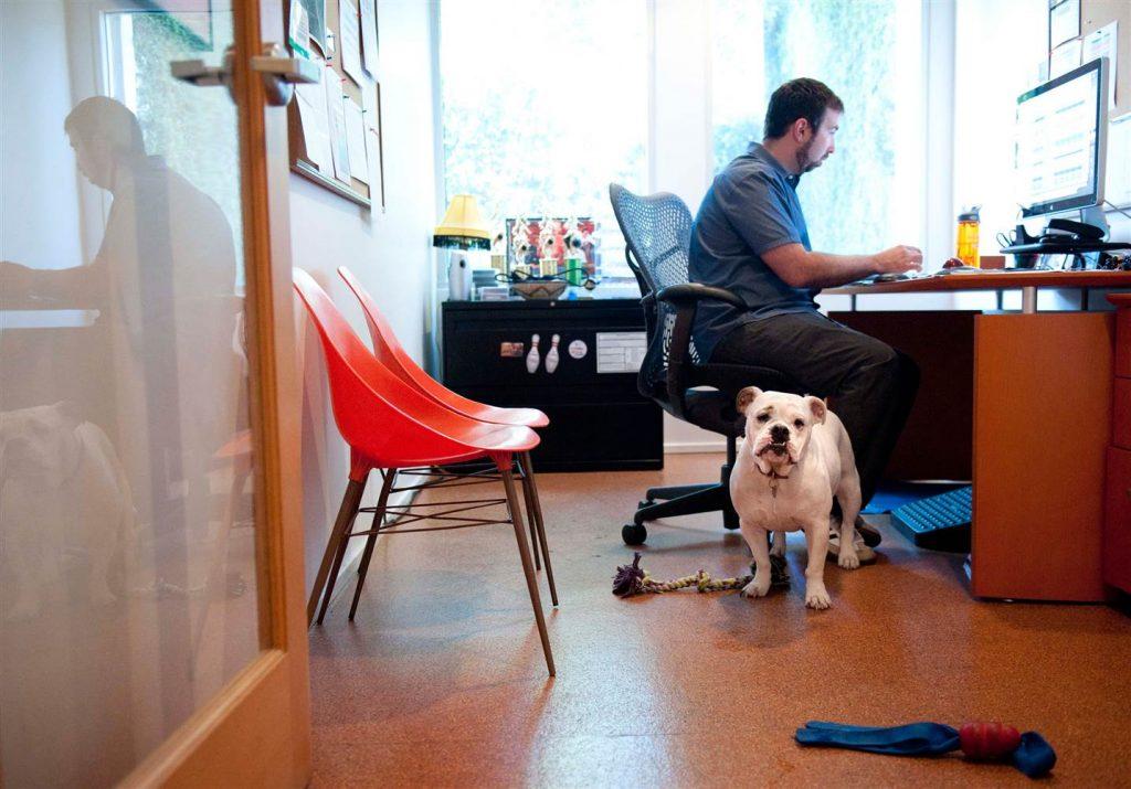Cuando NO debes llevar a tu mascota a la oficina