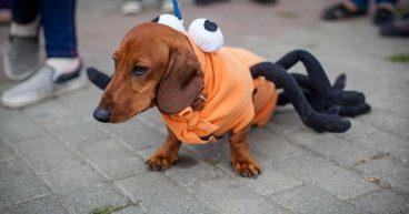 Descubre las cosas que los perros odian