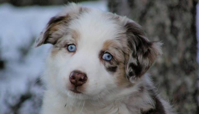 Descubre los tratamientos y síntomas de la sarna en perros