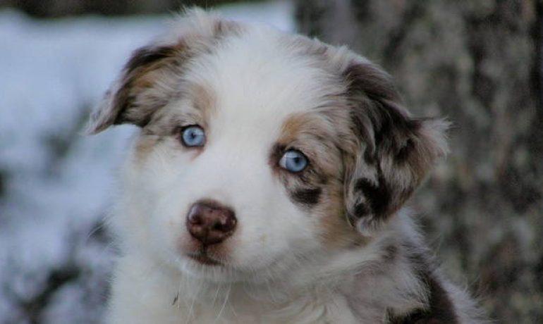 Como saber si tengo sarna en perros