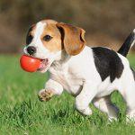 Descubre todo lo que debes saber ANTES de tener un perro