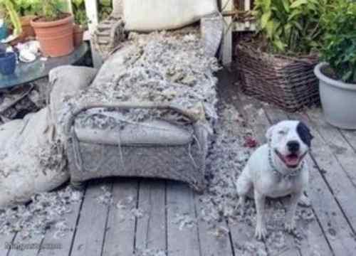 Juguetes Si recomendados si tu perro destroza la casa