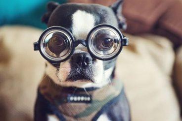 los perros son daltónicos o ven en blanco y negro