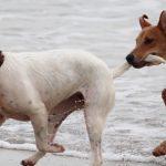 Mi perro ataca a otros perros