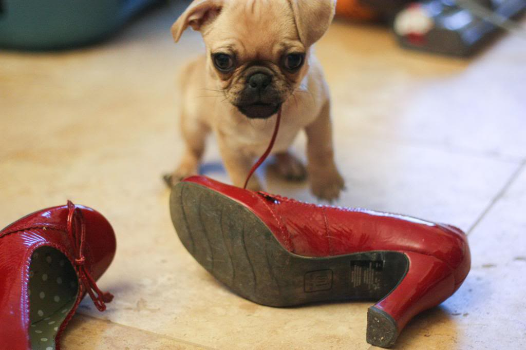Mi perro lo destroza todo en casa qu puedo hacer consejos wakyma - Que hacer para no aburrirse en casa ...
