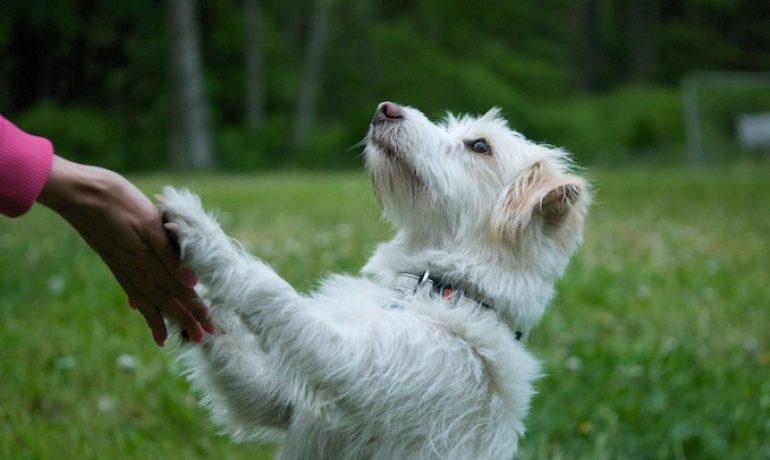 Mi Perro NO me hace Caso, ¿qué puedo hacer? Consejos y Soluciones