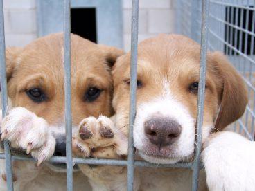 Perros mestizos: tipos, ventajas y precauciones