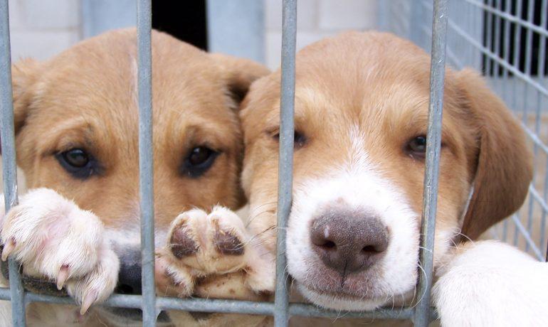 Resultado de imagen de perros mestizos