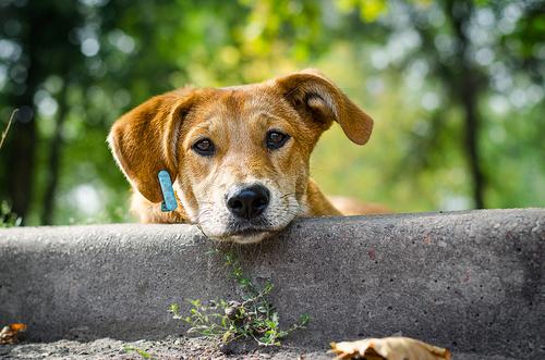 Prueba de temperamento de perros mestizos