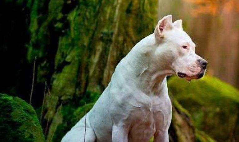 Razones para compartir tu vida con un perro de raza grande