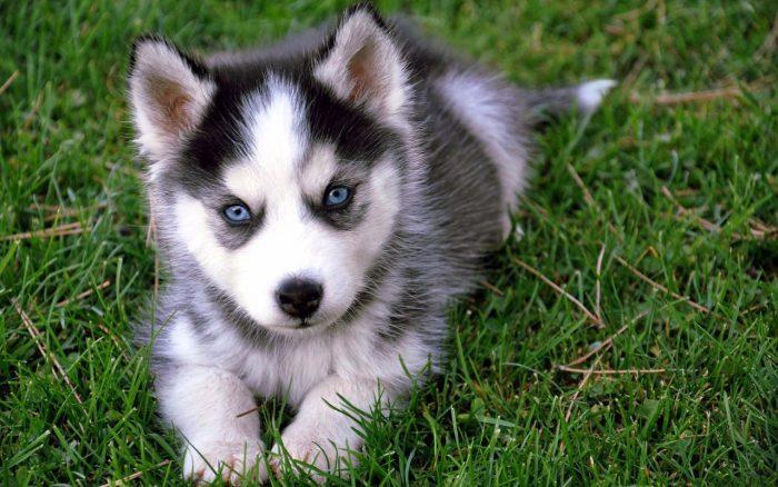 Síntomas del coronavirus en perros