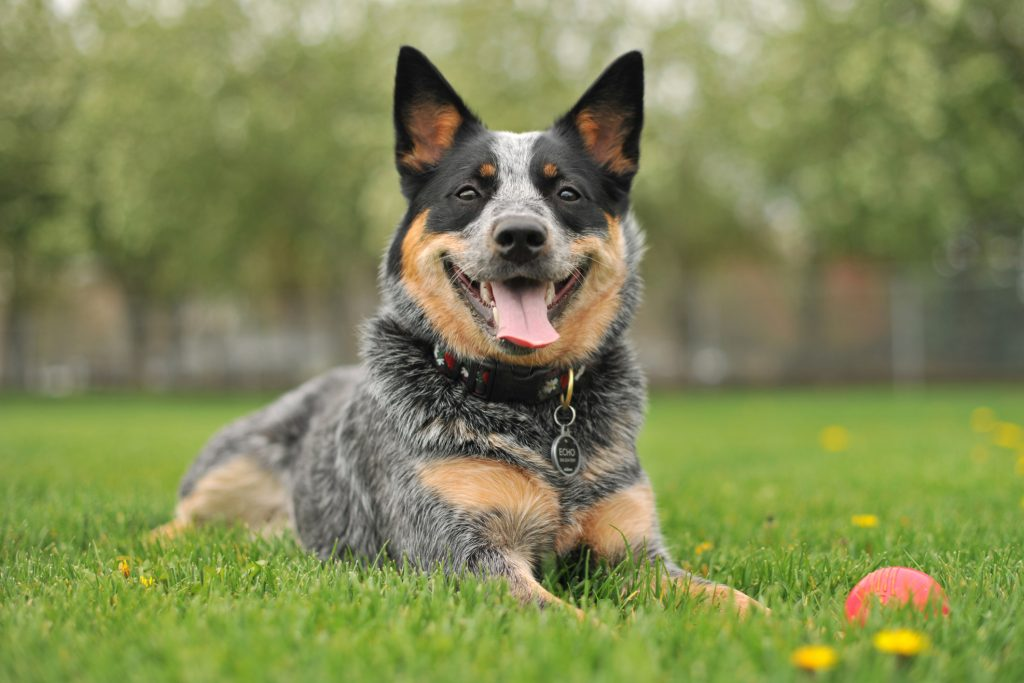Se puede prevenir el coronavirus canino