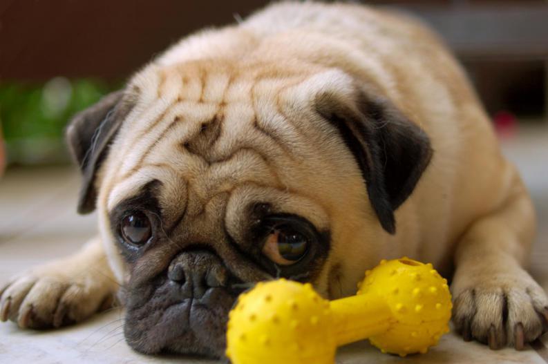 Sintomas de la urolitiasis en perros
