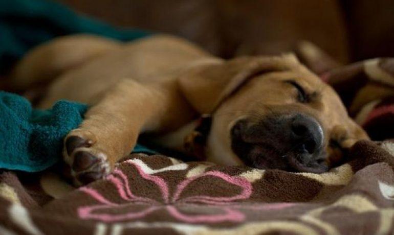 Tratamiento del parvovirus canino