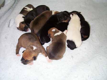 alimentar a una camada de cachorros