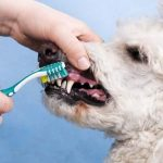 Aprende cómo limpiar los dientes a un perro