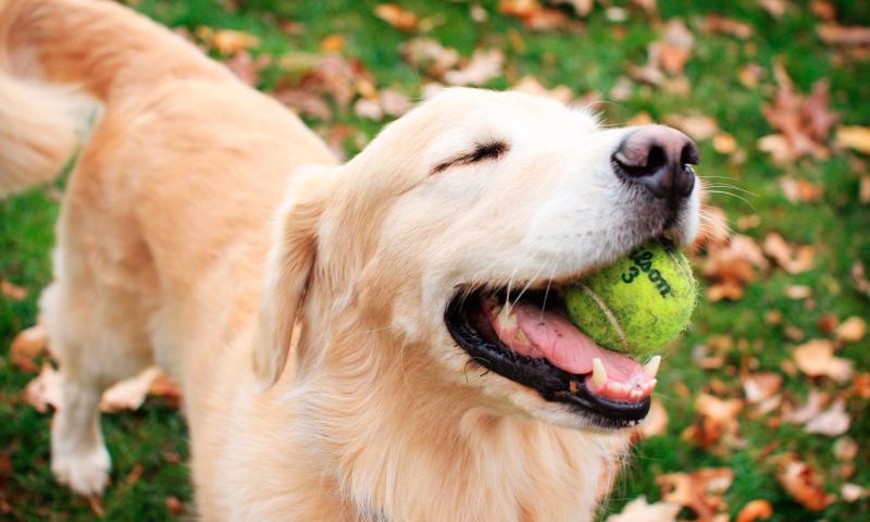 beneficios de la dieta BARF para perros